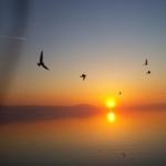 İki Dağın arasından İznik Gölünde güneşin batışı, ördekler ve uçak aynı karede