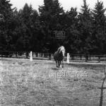 Karacabey Harasında Atlar 1983