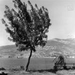 Gemlik Genel Görünümü, 1962